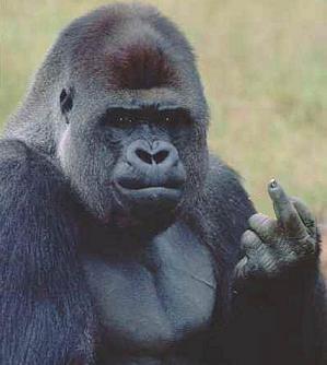 [Image: ape-finger-b21.jpg]